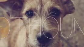 Pothound | Short Film
