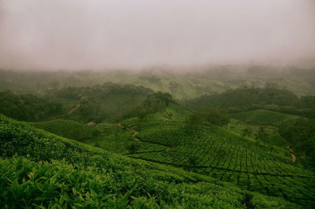 Darjeeling Tea Estates - 10 reasons to travel to India