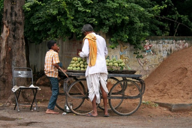Custard apples: Udaipur To Pindwara road trip