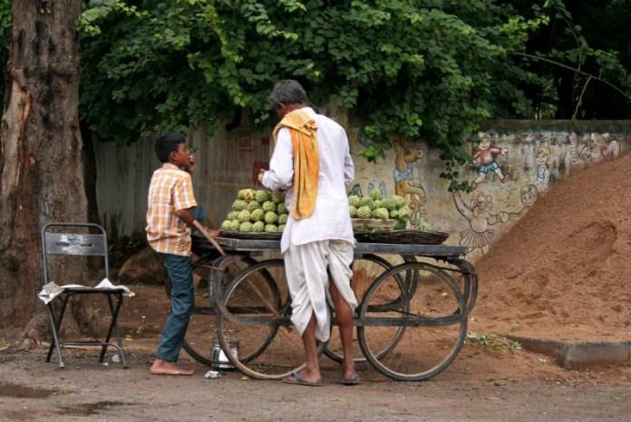 Custard apples: Udaipur To Pindwara road trip