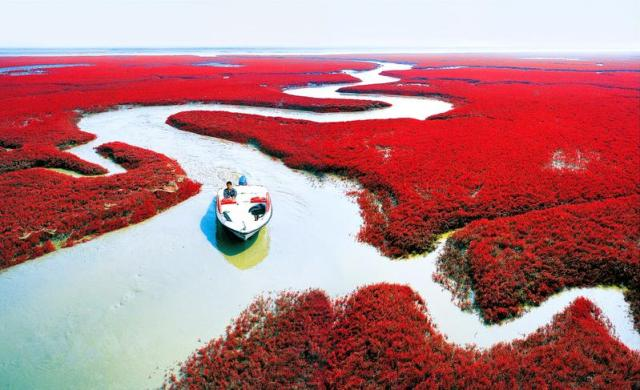 Shades of the World: a small boat crossing the red beach of Panjin, China lined with red blooms