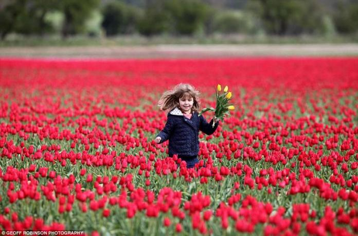 Shades of the World: A little girl frolicking in a field of red tulips with a bunch of flowers at hand