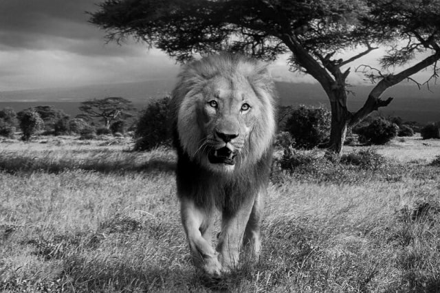 Etosha National Park: Best National Parks To Photograph