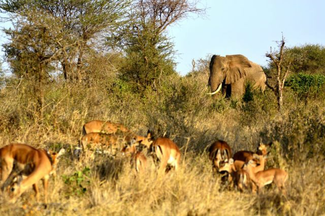 Serengeti National Park: Best National Parks To Photograph