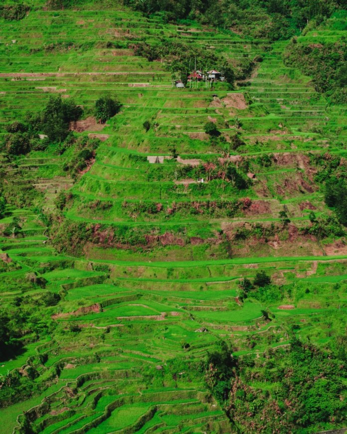 Reasons to visit the Philippines - Scenic rice terraces