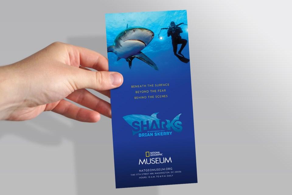Sharks-Rack-card