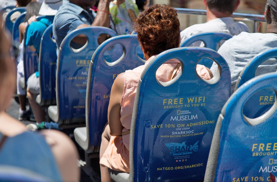 Sharks-seat-backs