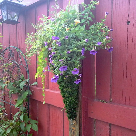 moss-chicken-fence-hanging-planter