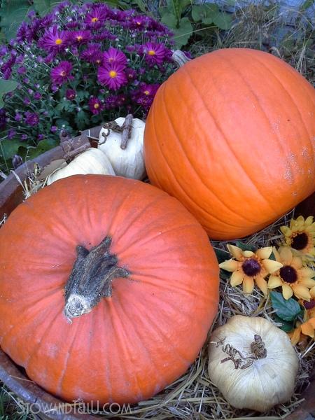fall-display-barrel-pumpkins