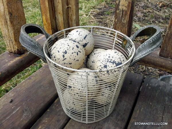 basket-decorative-speckled-farmhouse-eggs - StowAndTellU.com
