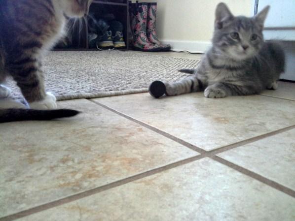 household-cat-toys