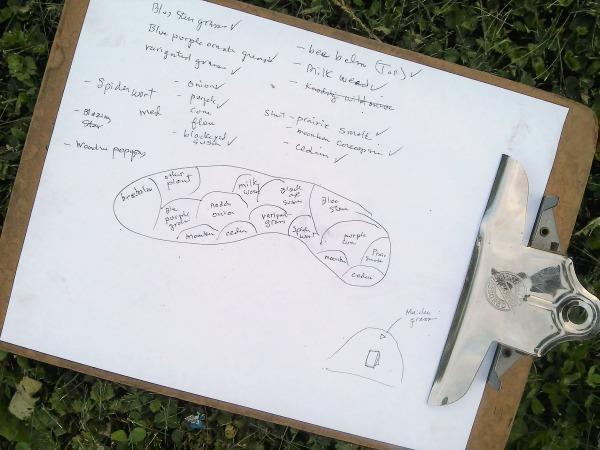 garden-planning-sketch