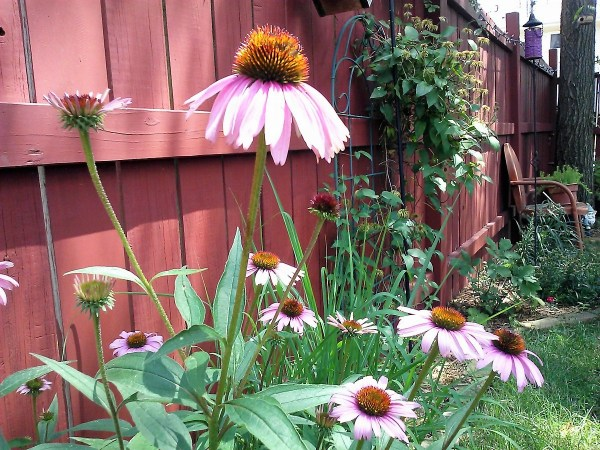 start-with-seed-garden