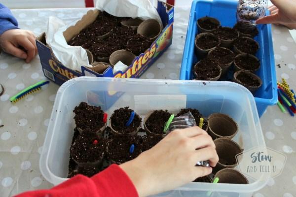 Seed planting project tiips | Stowandtellu.com