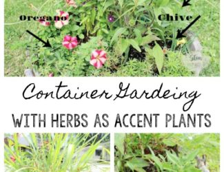 Inexpensive container gardening with herbs as accent plants to flowers | stowandtellu.com