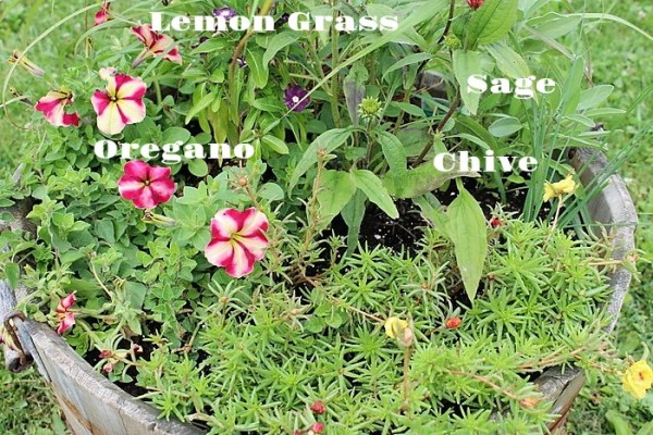 Flower and herb container garden companion planting | stowandtellu.com