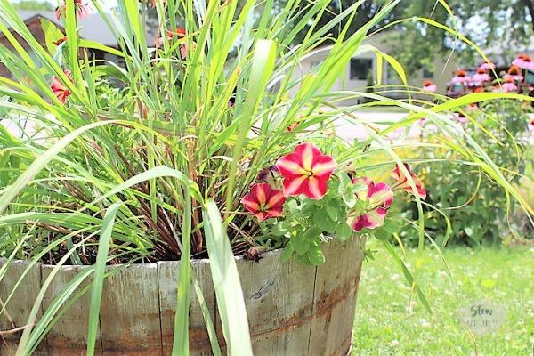 petunia-herb-container-garden