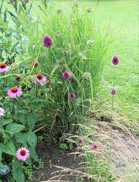diy-native-garden-nodding-wind-onion | stowandtellu.com