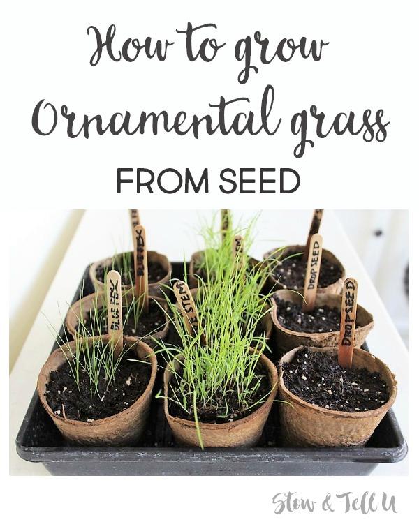 How to start ornamental grass from seed | how to grow prairie grass | stowandtellu.com