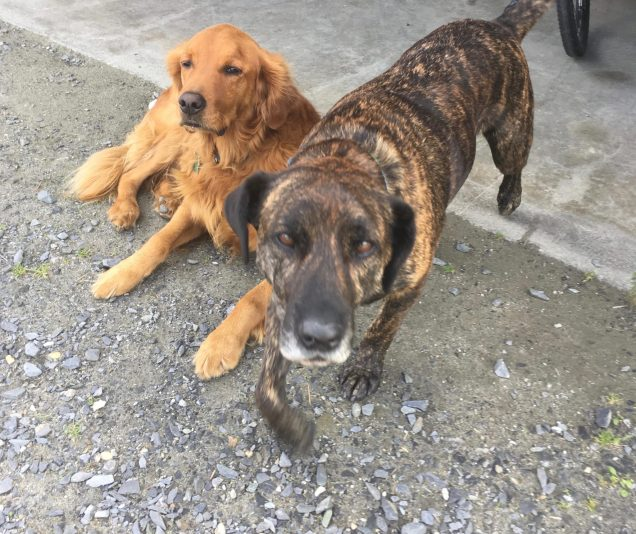 August 30, 2019 - Dogs at Bent Hill Brewery in Braintree, Vermont