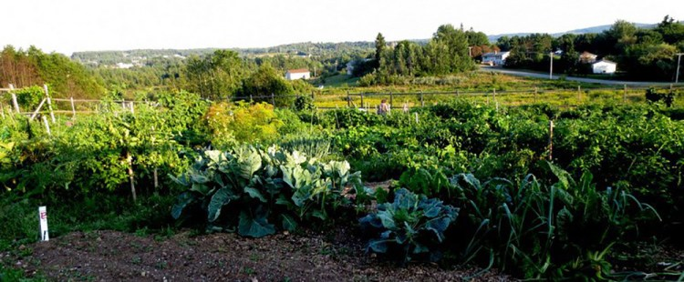The Hampton Community Garden