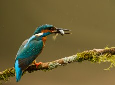 Kingfisher & Catch (26pts)