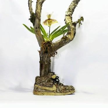 nike_tree_plant_epiphyte_ok_instagram_ok_12052014