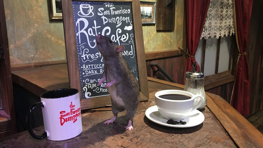 rat-cafe-san-francisco