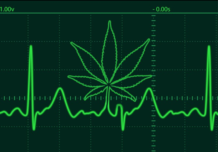 Is Cannabis Bad for Your Heart?