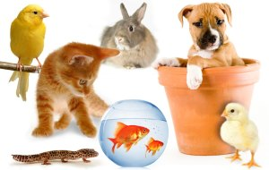 prekės gyvūnams internetu