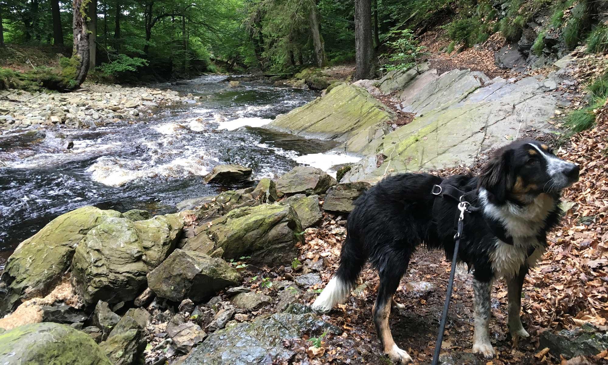 Mein Hund Mozart vor einer engen Passage am Flussufer