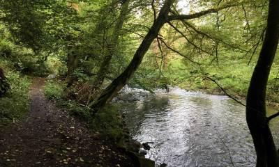 Am Ufer der Hönne bei Binolen