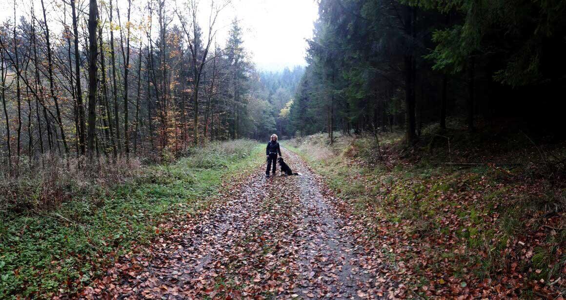 Sauerländer Waldroute Start mit Hund