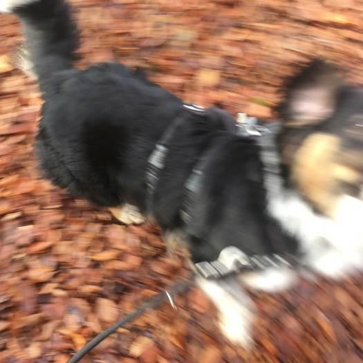 Springen und Rennen