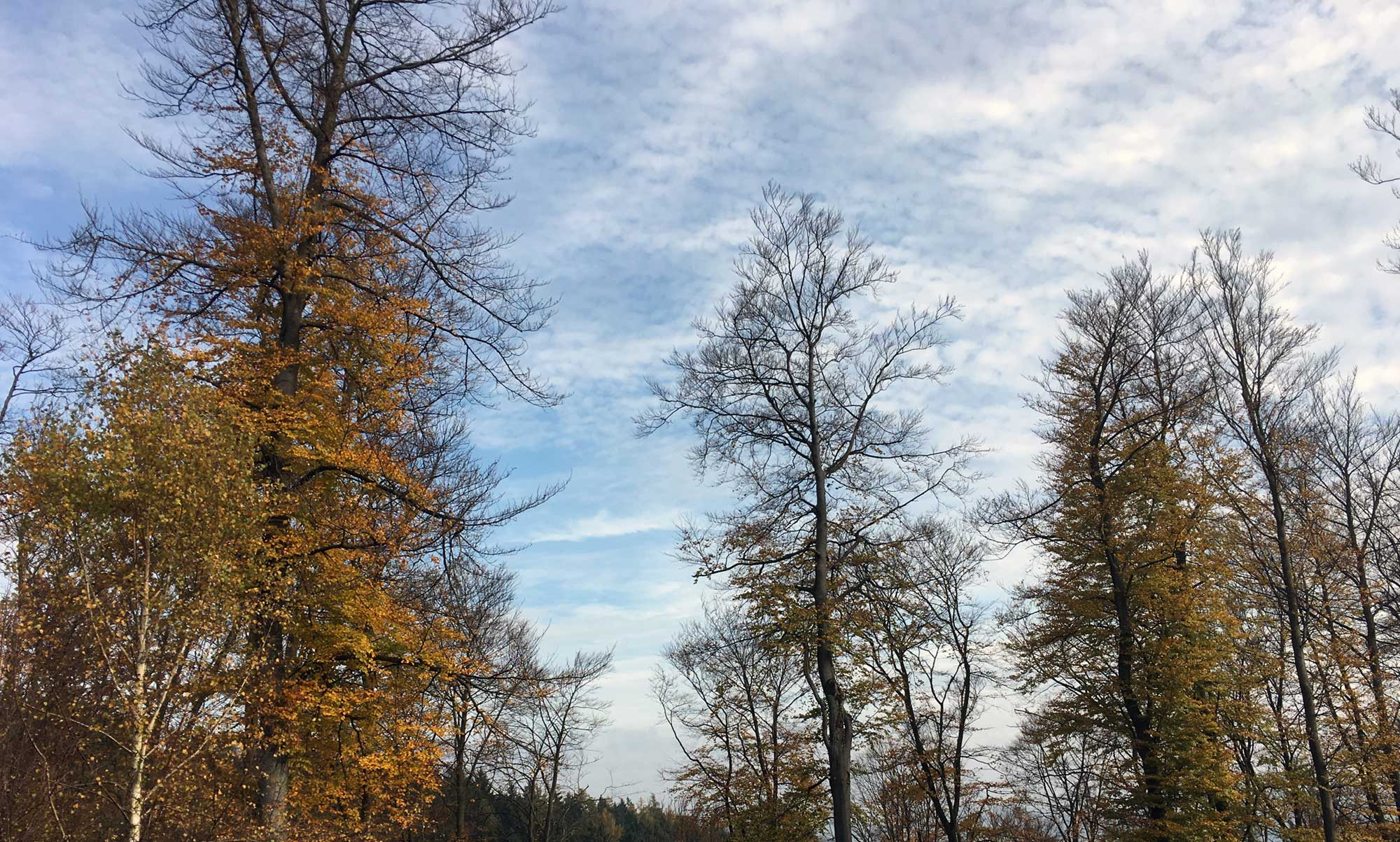 Hochgewachsene Bäume an den steilen Hängen