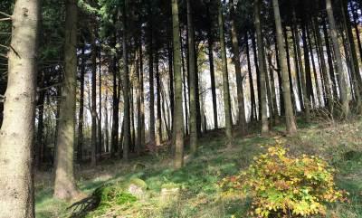 Hinter den Bäumen blitzt die Sonne