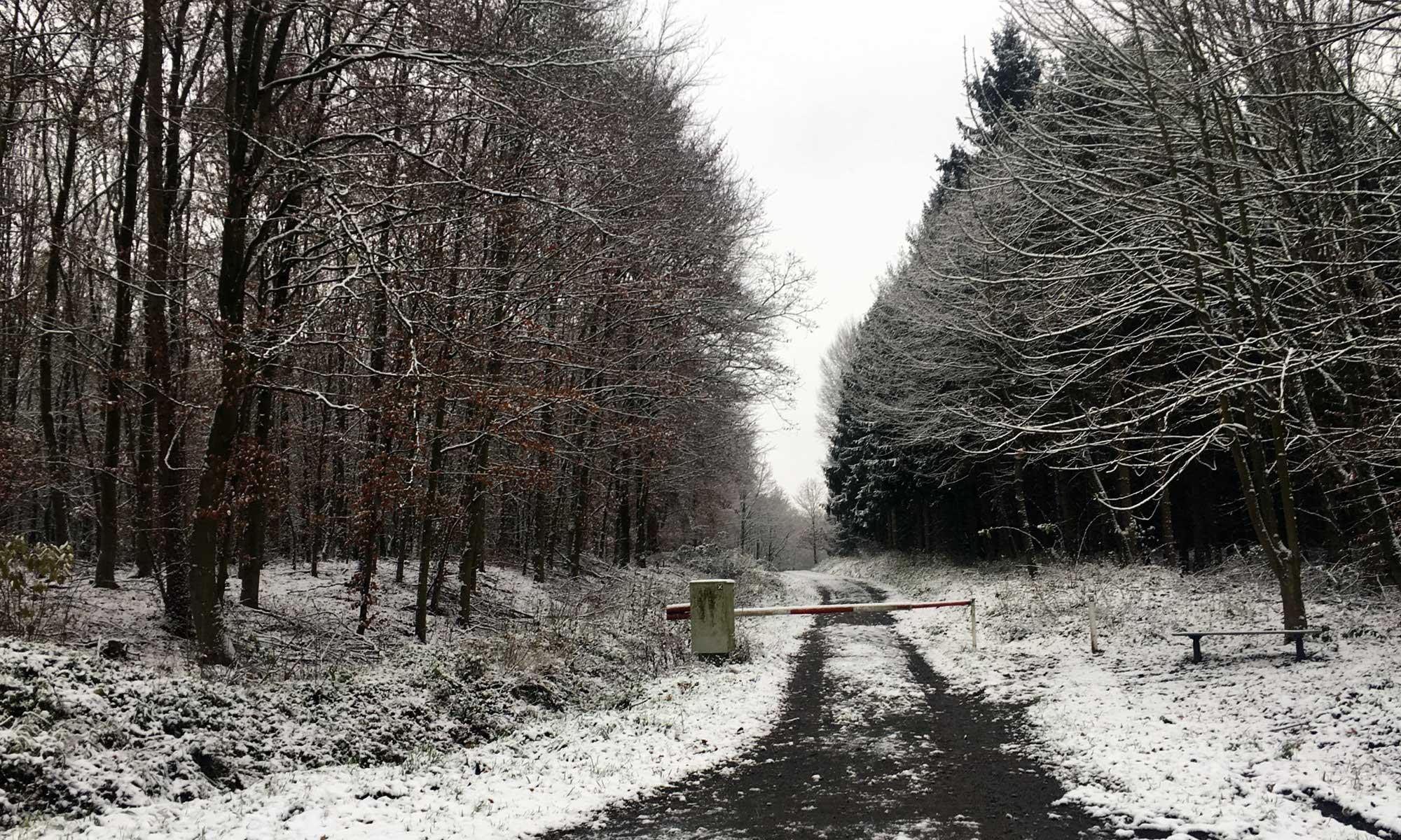 Horlecke Eingang zum Wald