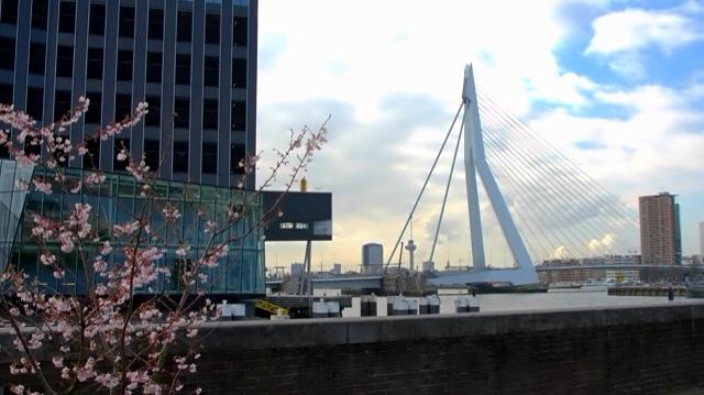 rotterdam 3 - Rotterdam