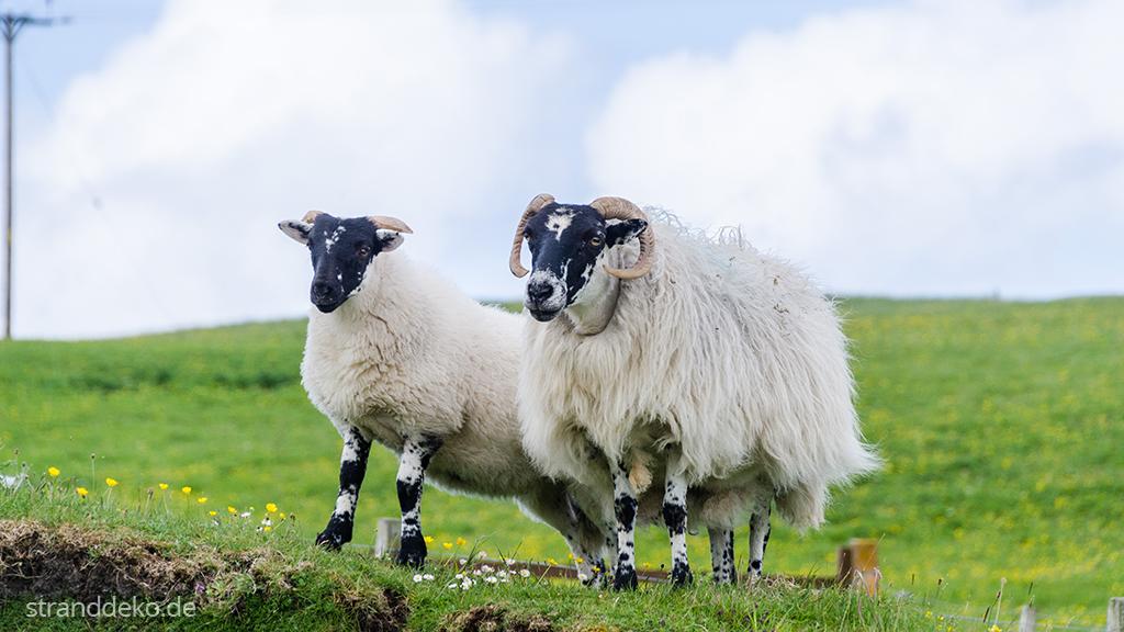 20160701 06 - Schottland II - Äußere Hebriden - Harris and Lewis