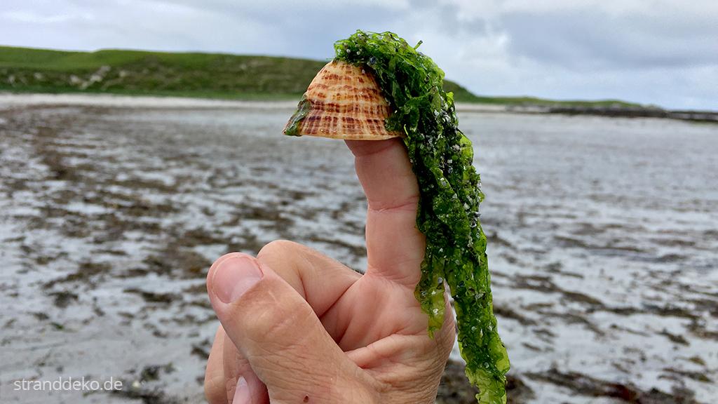 20160705 06 - Schottland III - Äußere Hebriden - Uist