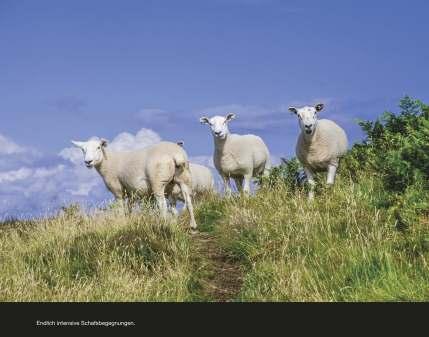 Fotobuch_Schottland_Seite_68
