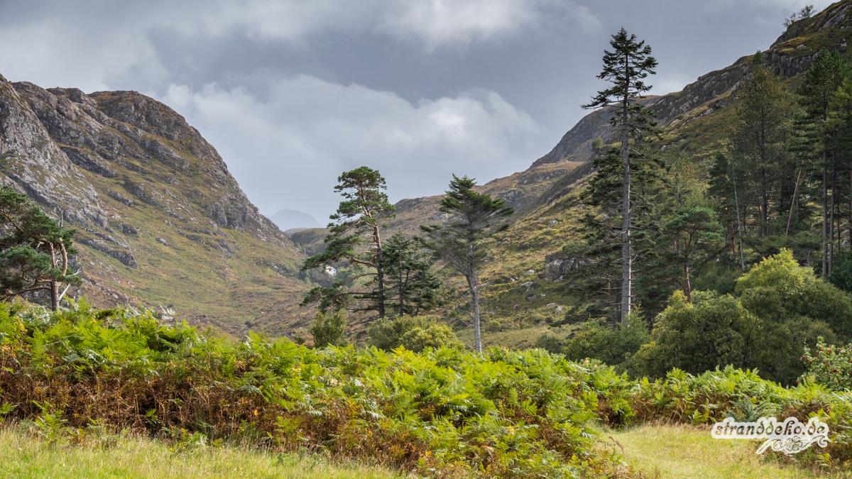 Schottland V 1143 - Schottland - V- Wandertage in Wester Ross