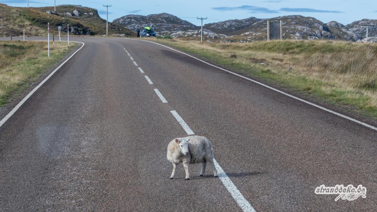 Schottland V 956 - Schottland - V- Wandertage in Wester Ross