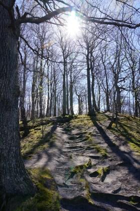 Buchenwälder - Weltnaturerbe Rügen