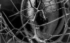 Cage végétale