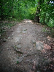 Chapin Forest