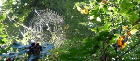 Spiders Web - like diamond wires