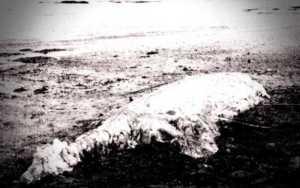 Το παράξενο πλάσμα που ξεβράστηκε στις ακτές του Χερβούργου, το 1934...
