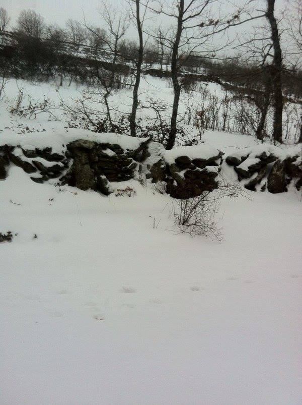 jalisco snow, guadalaraja snow, jalisco snow march 2016, jalisco snow march 9 2016 pictures, jalisco snow march 2016 pictures, snow storm mexico, anomalous snow mexico, mexico snow storm pictures, jalisco snow storm march 2016 photo