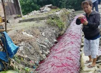 blood red river, blood red river video, blood red river picture, blood red river indonesia august 2017, blood red river indonesia august 2017 video, blood red river indonesia august 2017 picture